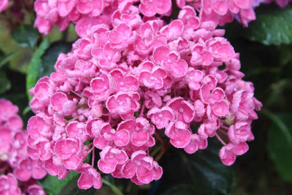 fiori ai giardini d'autore