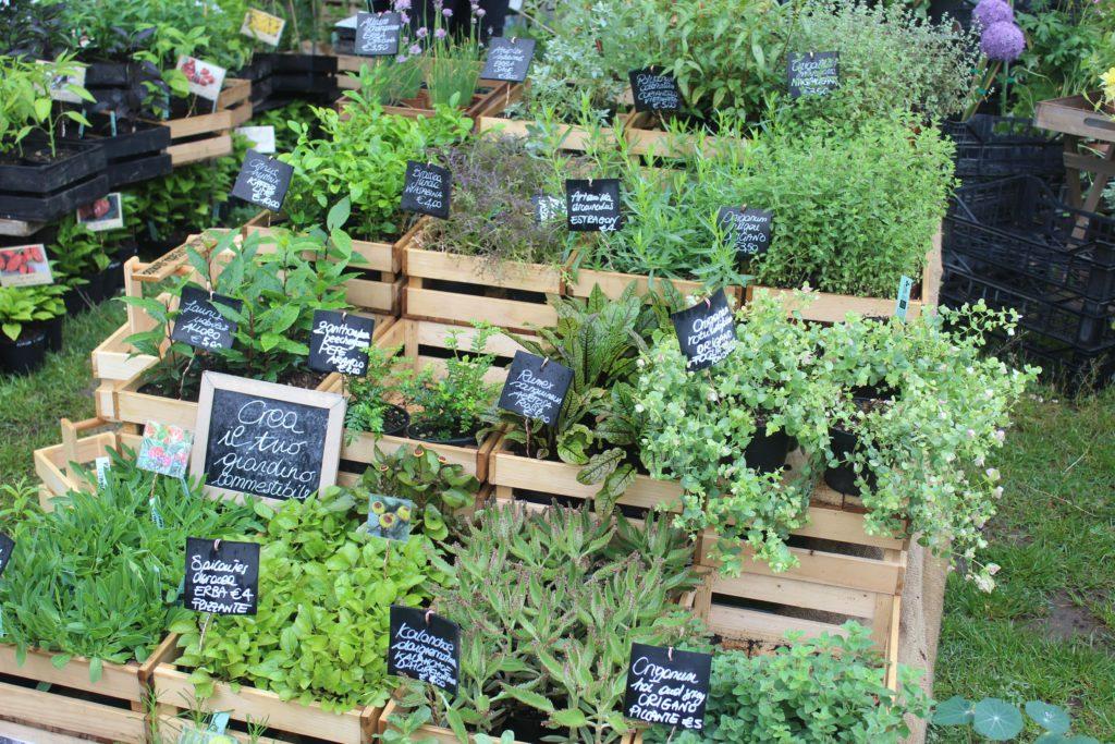 piante aromatiche commestibili
