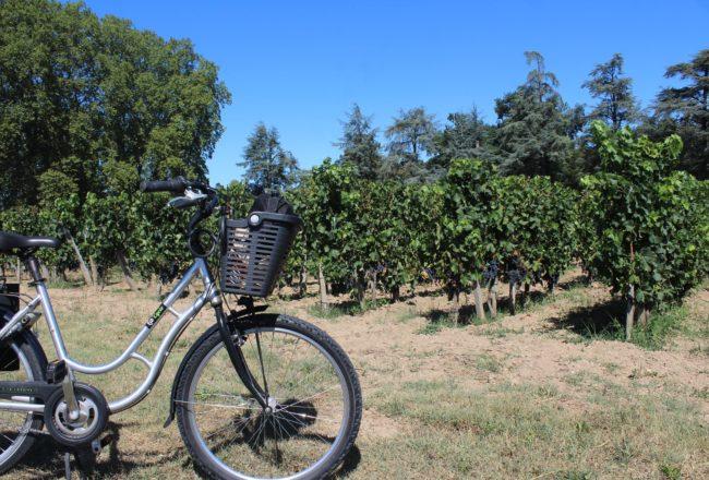 pomerol in bicicletta