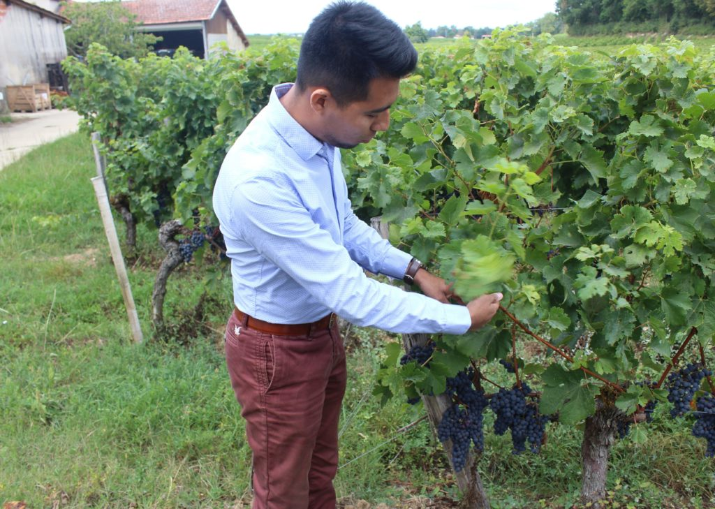 chateau panet vignobles carles